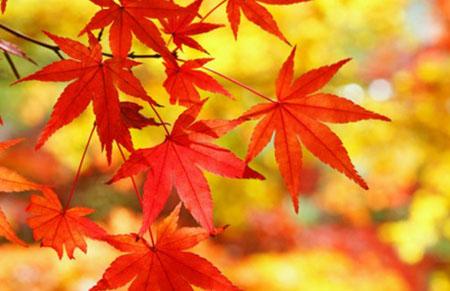 泉佐野市の紅葉